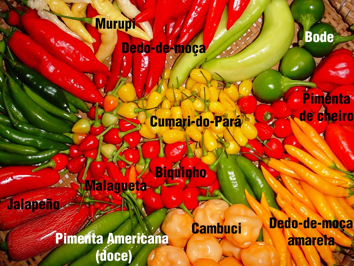 Pimenta malagueta(Chili pepper)